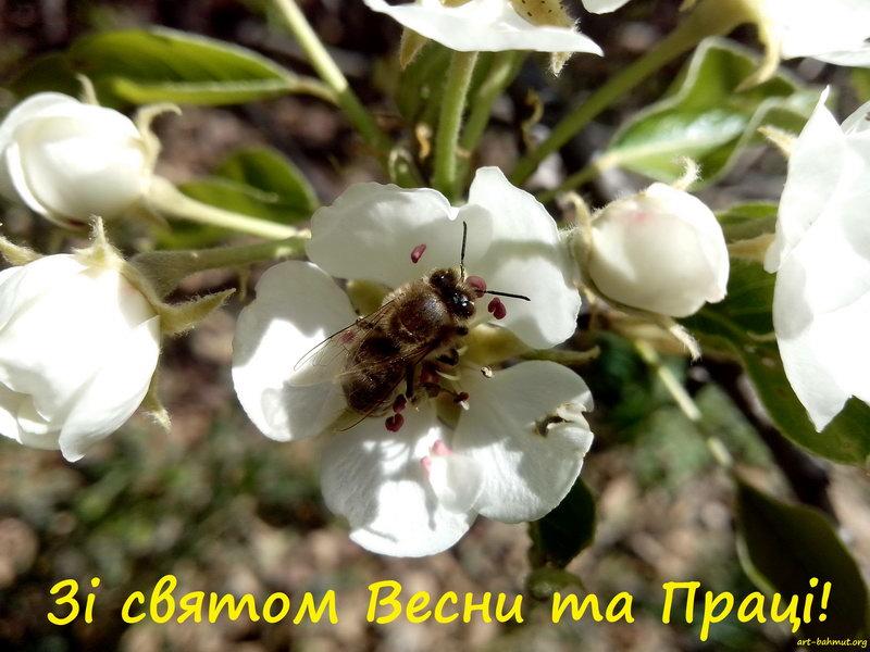 Зі святом Весни та Праці!